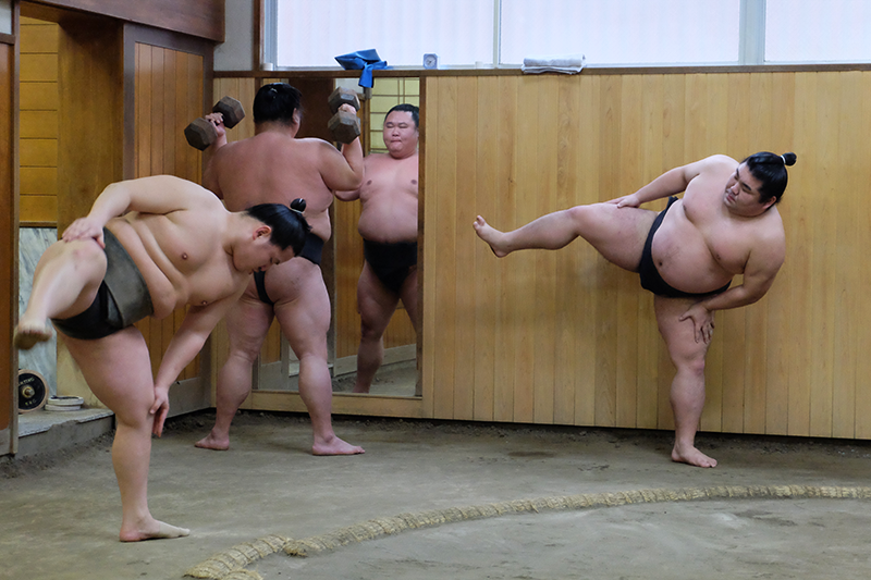 sumo11.png