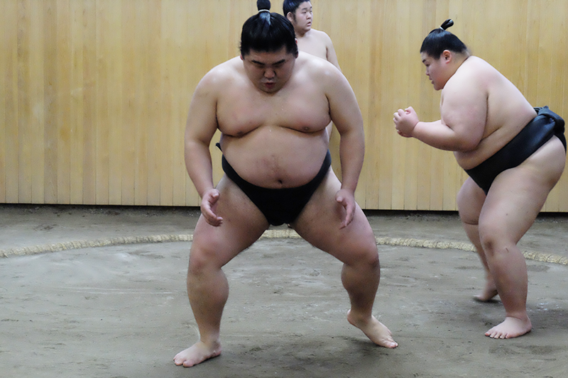 sumo4.png