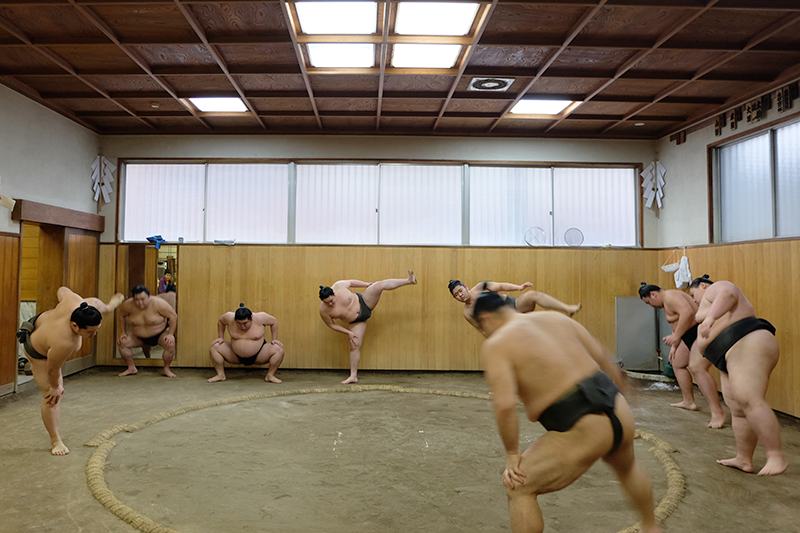 sumo1.png
