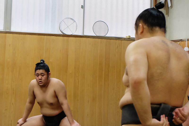 sumo8.png