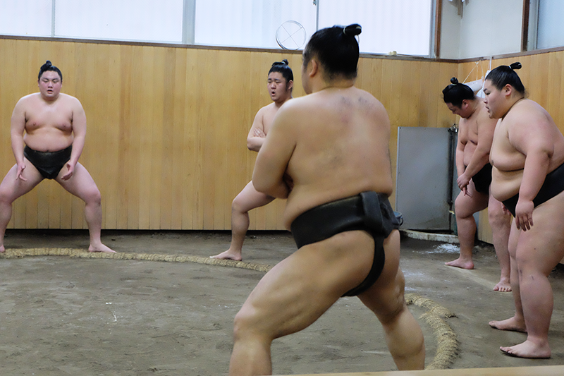 sumo10.png