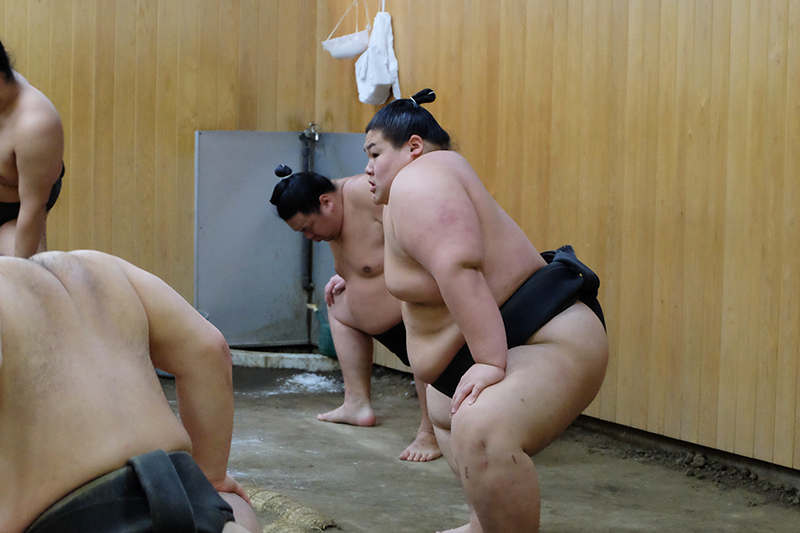 sumo7.png