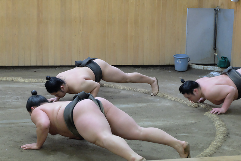 sumo3.png